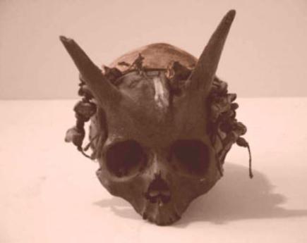 humanskullhorned-435x345